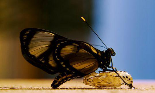 ar-540x360-borboleta